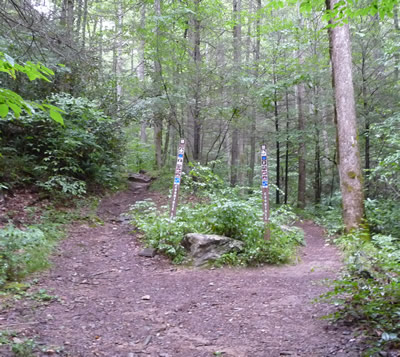 Coontree (Coon Tree) Trail Junction